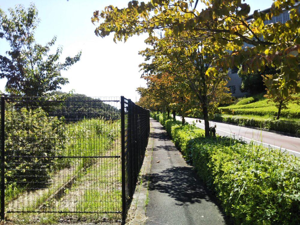 小田急線の車両基地が見える唐木田2丁目緑地へ続く歩道