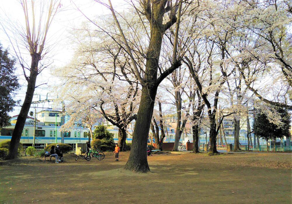 林間公園内から見える小田急線の電車