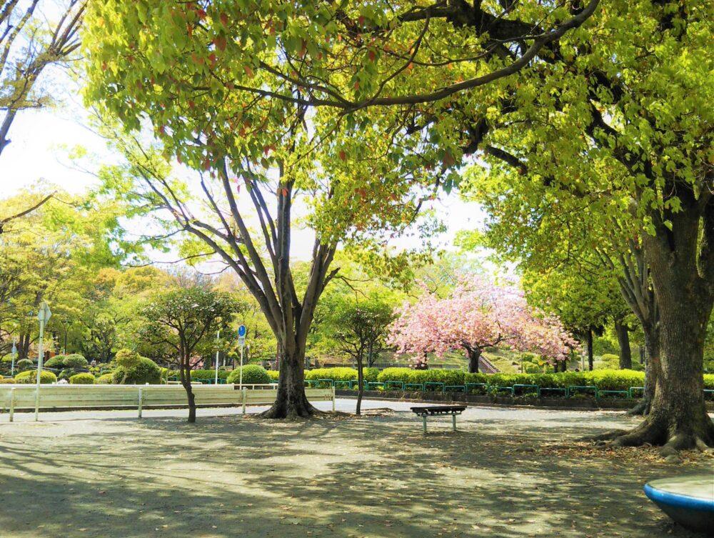 鹿沼公園に咲く桜と新緑