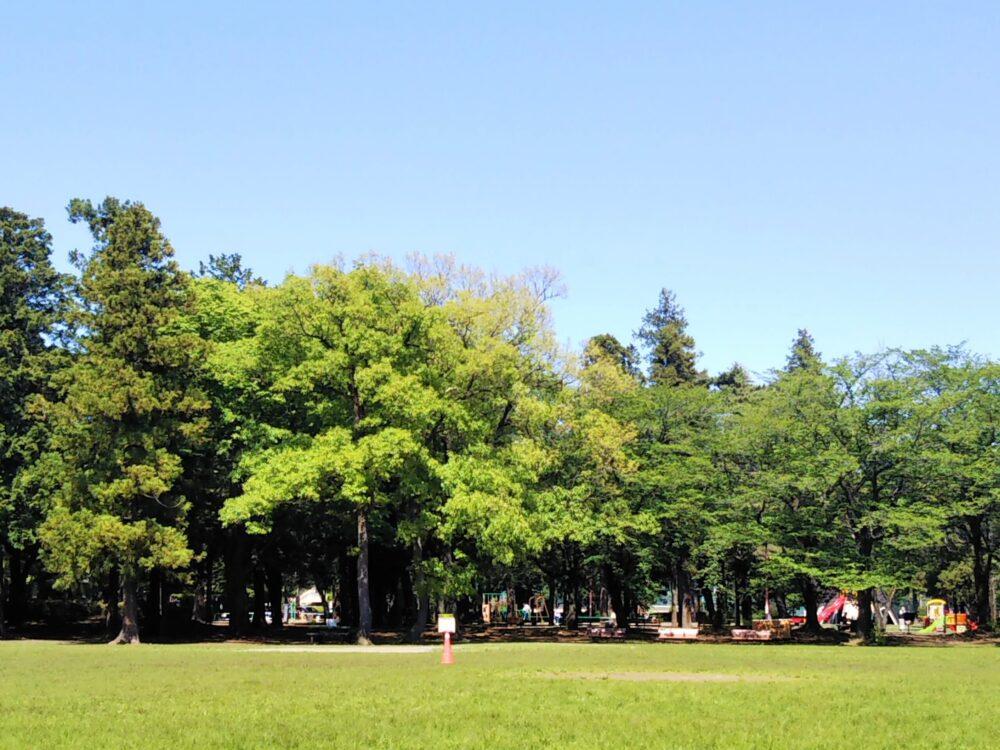 淵野辺公園の芝生広場